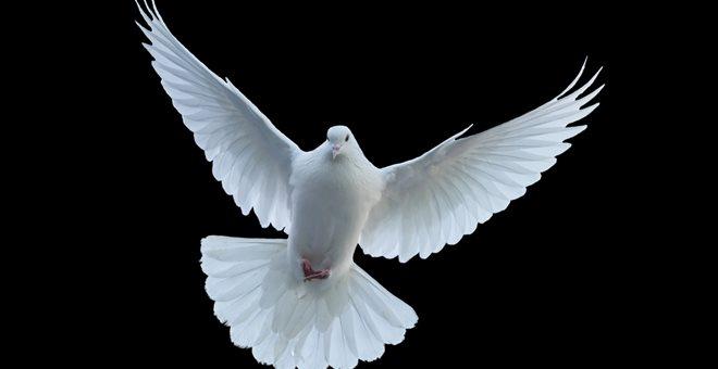 Το... Άγιο Πνεύμα έσωσε οδηγό από πρόστιμο για υπερβολική ταχύτητα — ΣΚΑΪ (www.skai.gr)